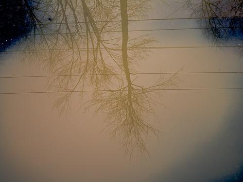 treeShadowsInPuddle.jpg
