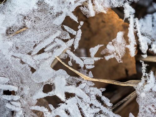 white ice crystals macro closeup over brown leaf