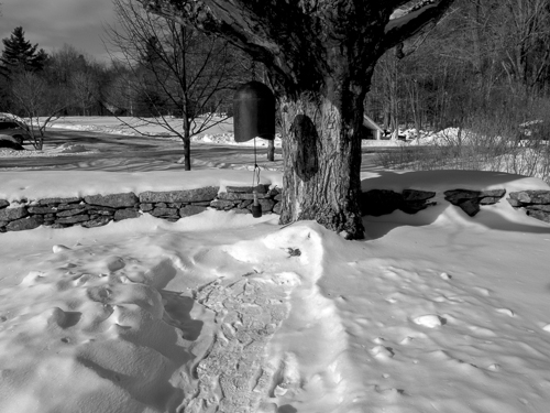 black and white, old maple in snow with bell hanging