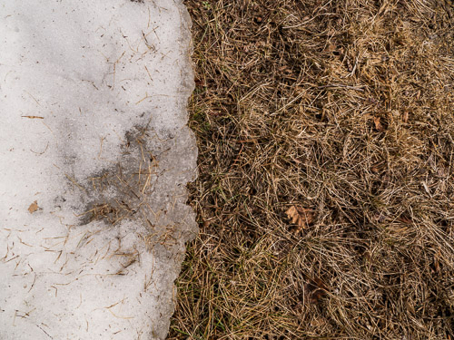 edge of snow and dry lawn grass