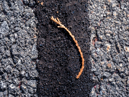 closeup of evergreen twig on tar on asphalt