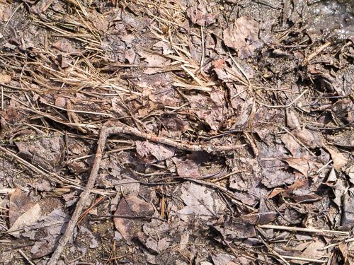 Sticks on Frozen Leaves