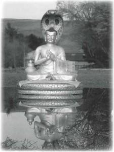 Brasington Image