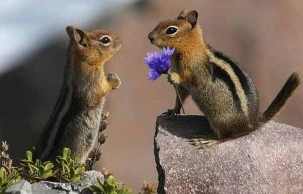 cute-chipmunks