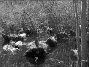 Spring2006_AKC2
