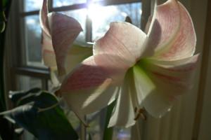 orchidjan16