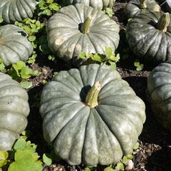 pumpkins-stored-1